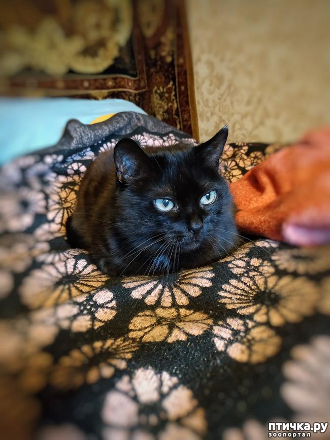 фото 1: Котя - добренький