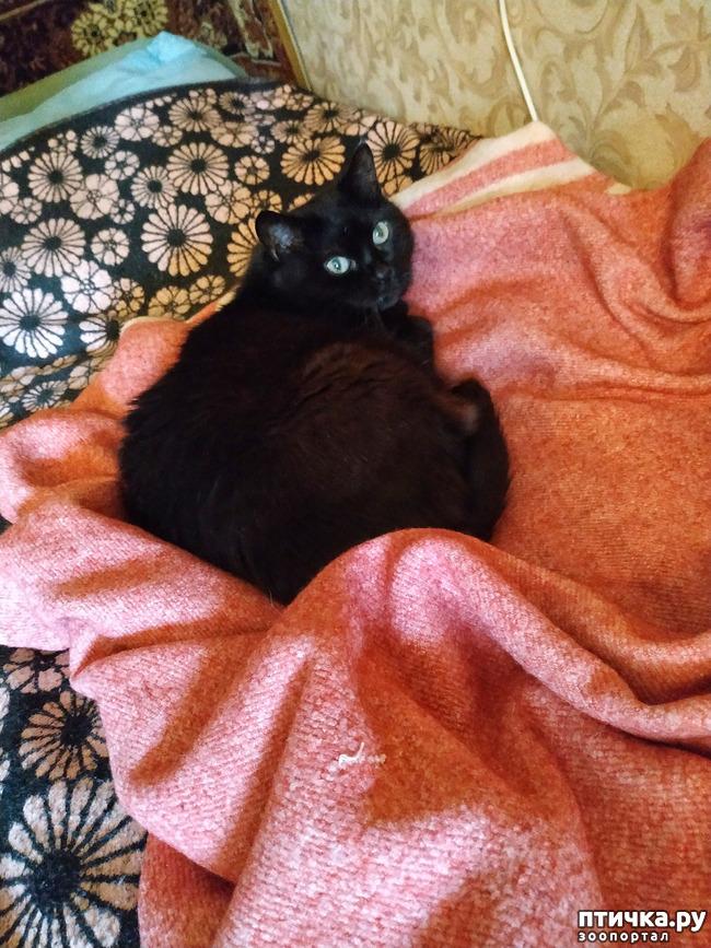 фото 3: Котя - добренький