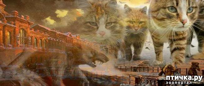 фото 4: Коты в блокадном Ленинграде