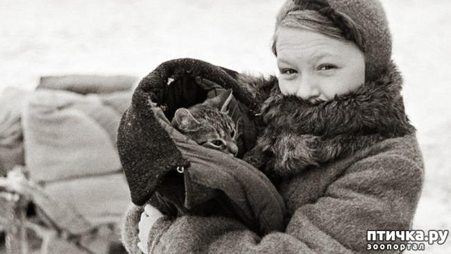 фото 3: Коты в блокадном Ленинграде