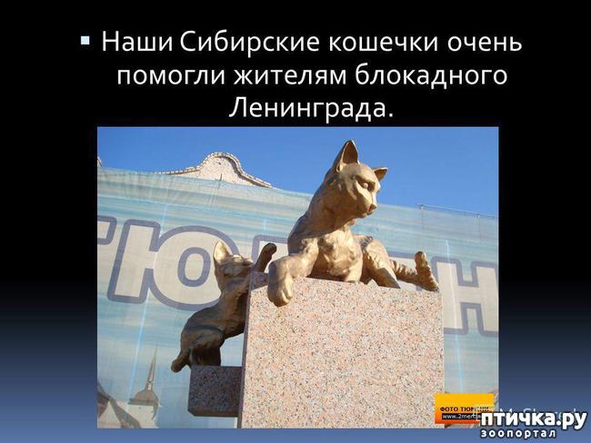 фото 6: Коты в блокадном Ленинграде