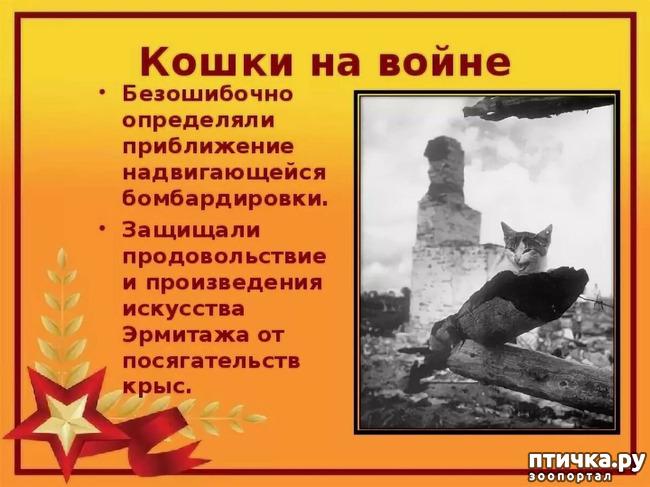 фото 7: Коты в блокадном Ленинграде