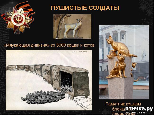 фото 8: Коты в блокадном Ленинграде