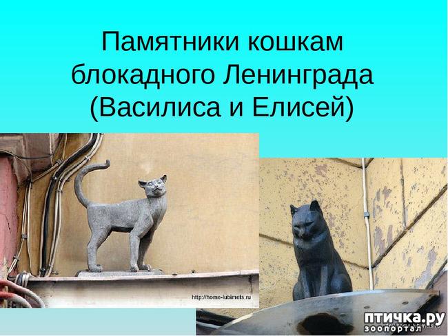 фото 11: Коты в блокадном Ленинграде