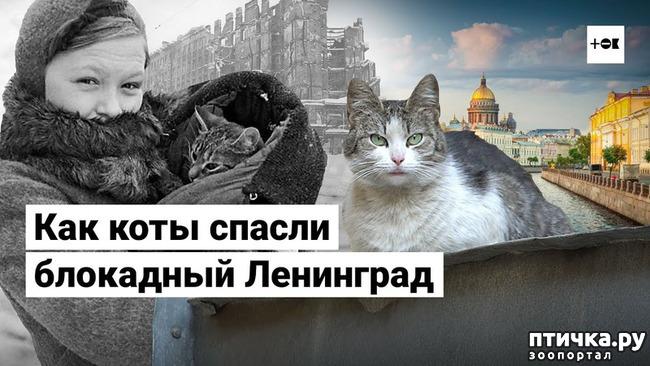 фото 1: Коты в блокадном Ленинграде