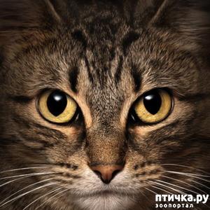 фото: Кот