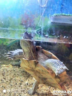 фото: 10 вопросов и ответов о черепахах.