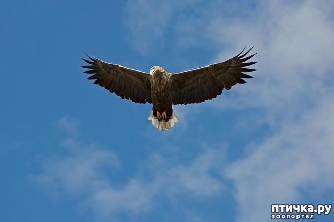 фото 7: Орланы. Д. п.