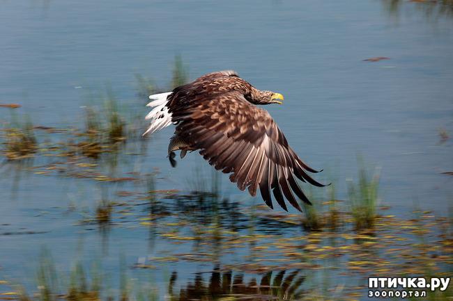 фото 12: Орланы. Д. п.