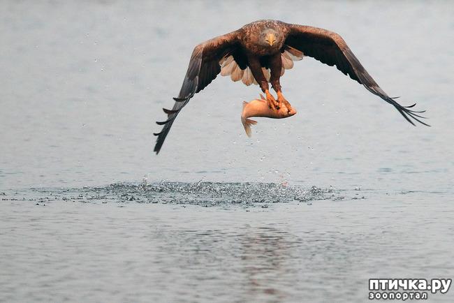фото 9: Орланы. Д. п.