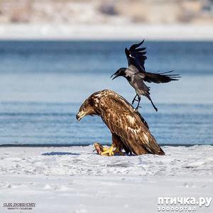 фото: Орланы. Д. п.