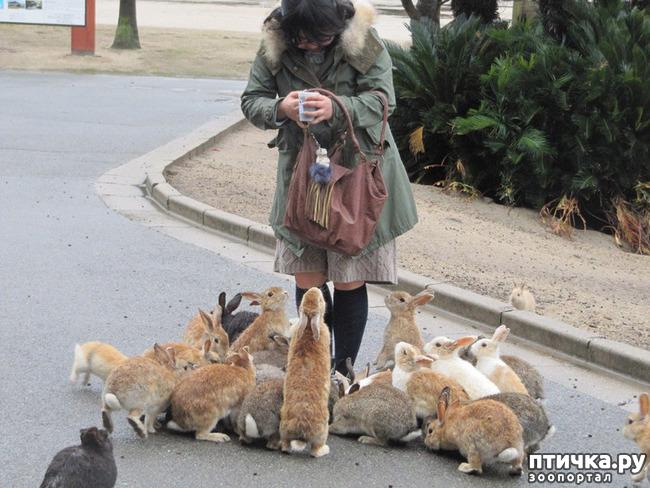 фото 6: Вот он, кроличий рай!