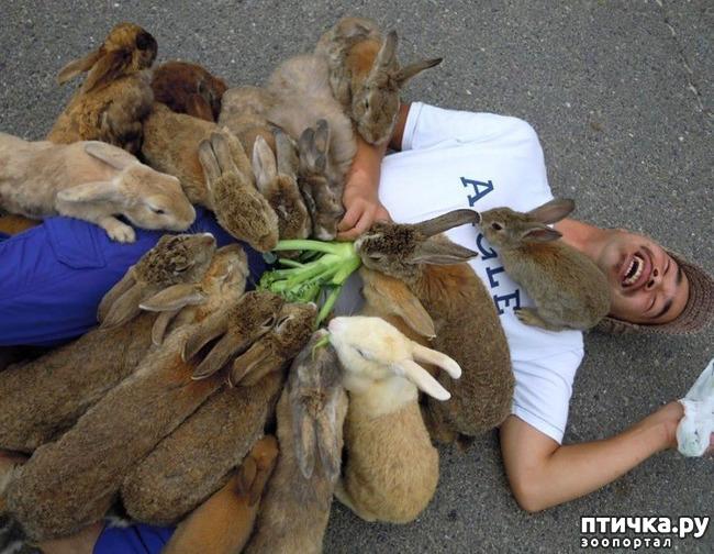 фото 8: Вот он, кроличий рай!