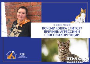 """фото: Бесплатная онлайн-лекция о психологии кошек от фонда помощи животным """"РЭЙ"""""""