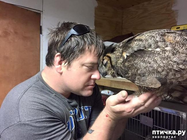 фото 2: Эта спасенная сова – воплощение благодарности