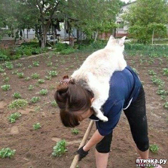 фото 1: Мы с Петровной тут вдвоем, огород копали, что такое слово лень? - даже не слыхали.