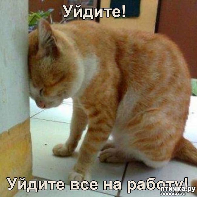 фото 1: Когда и у котов заканчивается терпение