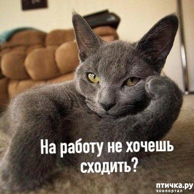 фото 2: Когда и у котов заканчивается терпение