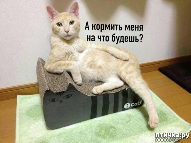 фото 4: Когда и у котов заканчивается терпение