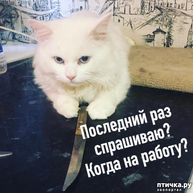 фото 5: Когда и у котов заканчивается терпение