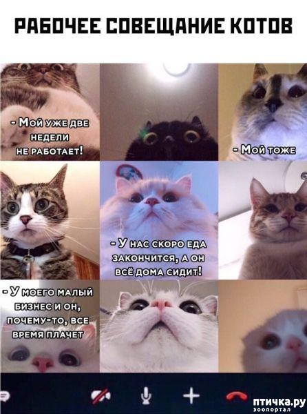 фото 1: Где-то в кошачьей вселенной