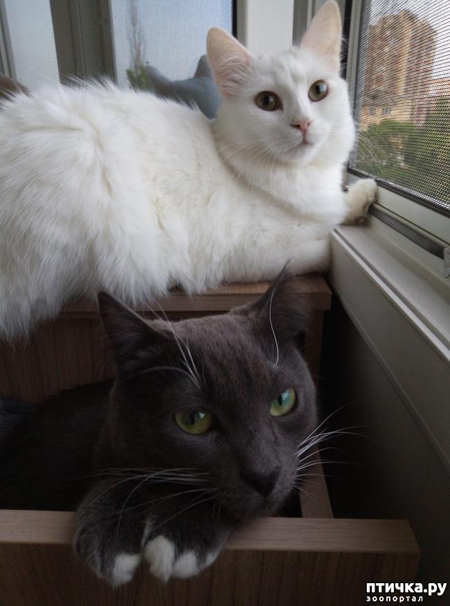 фото 1: Котики играются