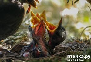 """фото: """"Не беспокоить! """" или Внимание, птицы на гнездах!"""
