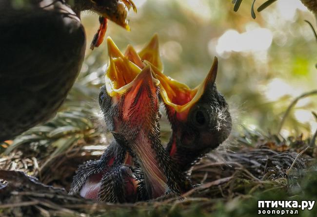"""фото 1: """"Не беспокоить! """" или Внимание, птицы на гнездах!"""