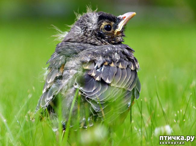 """фото 3: """"Не беспокоить! """" или Внимание, птицы на гнездах!"""