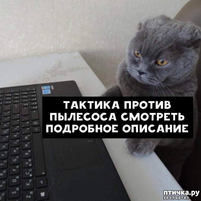 фото 3: Какие вопросы задали бы коты в Гугле...