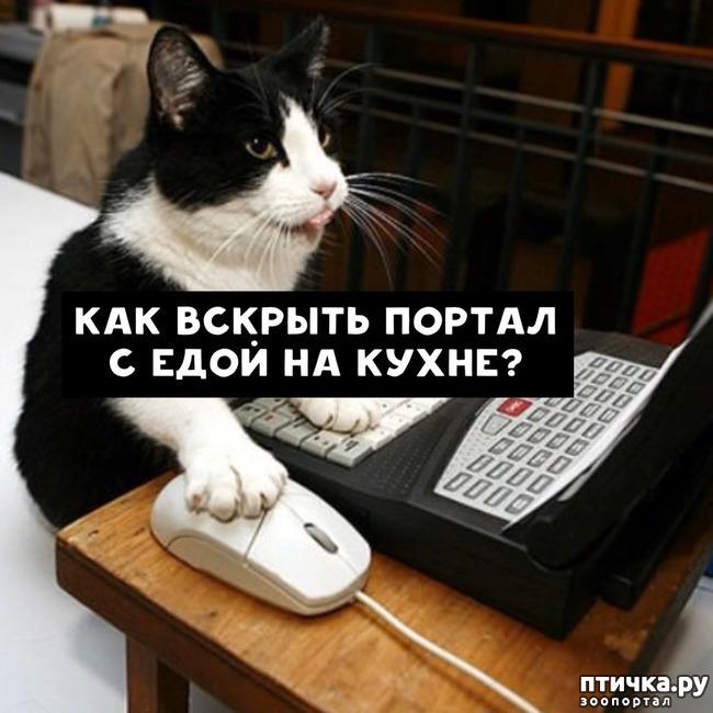 фото 4: Какие вопросы задали бы коты в Гугле...