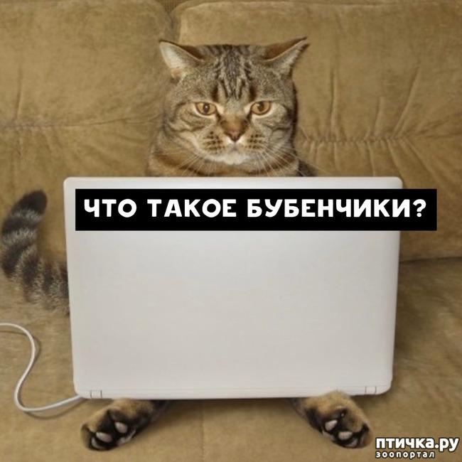 фото 5: Какие вопросы задали бы коты в Гугле...