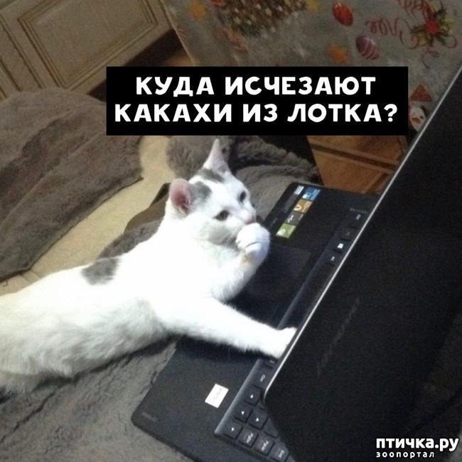 фото 6: Какие вопросы задали бы коты в Гугле...