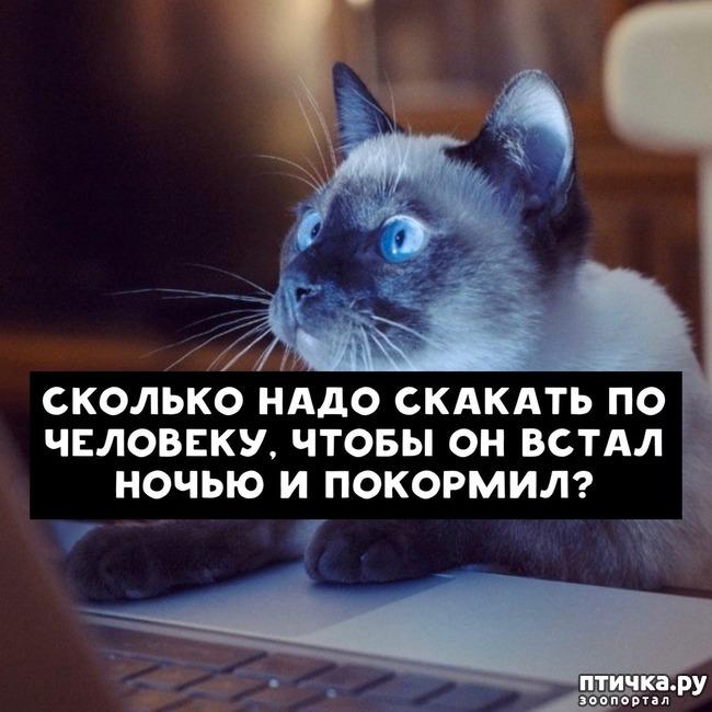 фото 7: Какие вопросы задали бы коты в Гугле...