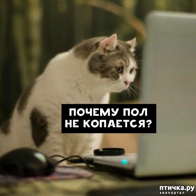 фото 8: Какие вопросы задали бы коты в Гугле...