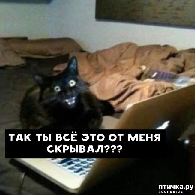 фото 9: Какие вопросы задали бы коты в Гугле...