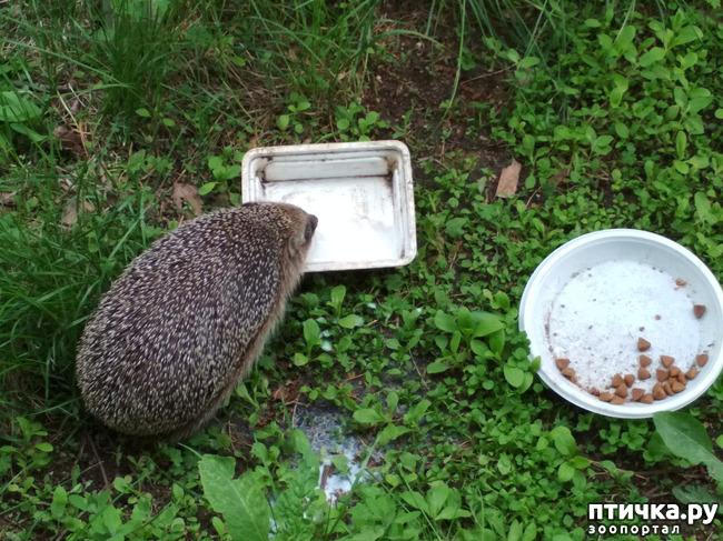 фото 2: Ёжики в саду