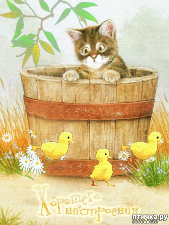 фото 10: Какие вопросы задали бы коты в Гугле...