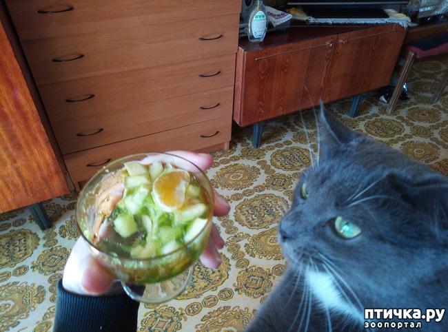 фото 5: Кот-сладкоежка