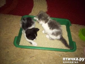 фото: Марсель и Софийка на новом месте