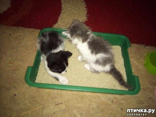 фото 1: Марсель и Софийка на новом месте