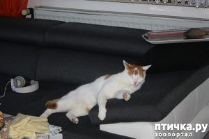 фото: Как Пинат помогал делать уборку