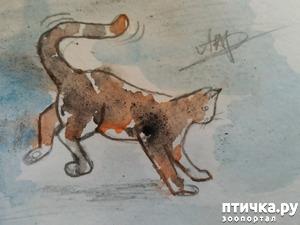 фото: Главные правила кошек