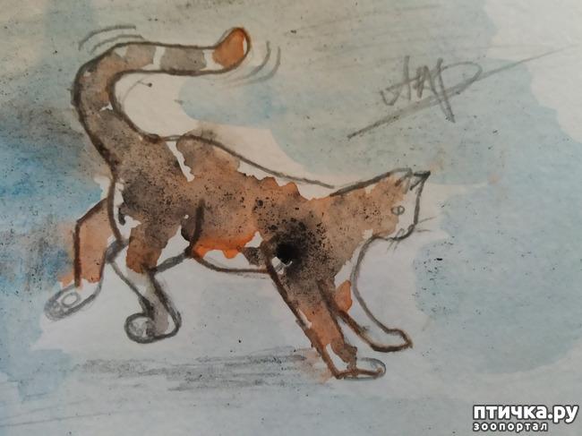 фото 1: Главные правила кошек