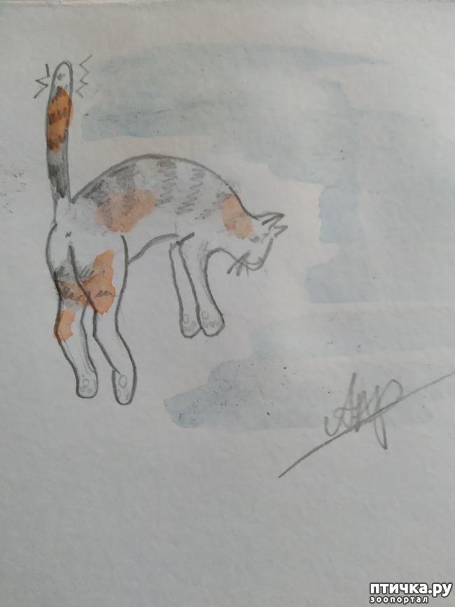 фото 2: Главные правила кошек