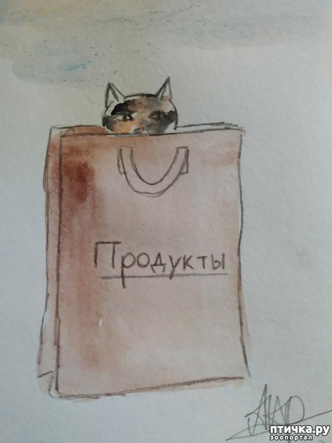 фото 4: Главные правила кошек