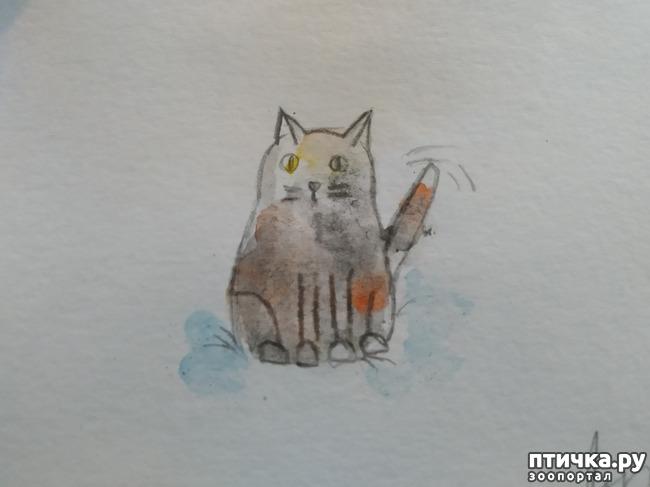 фото 10: Главные правила кошек