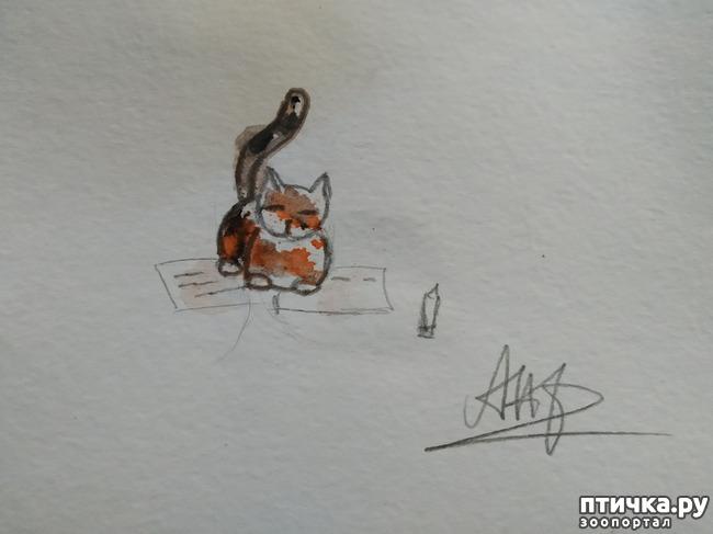 фото 11: Главные правила кошек