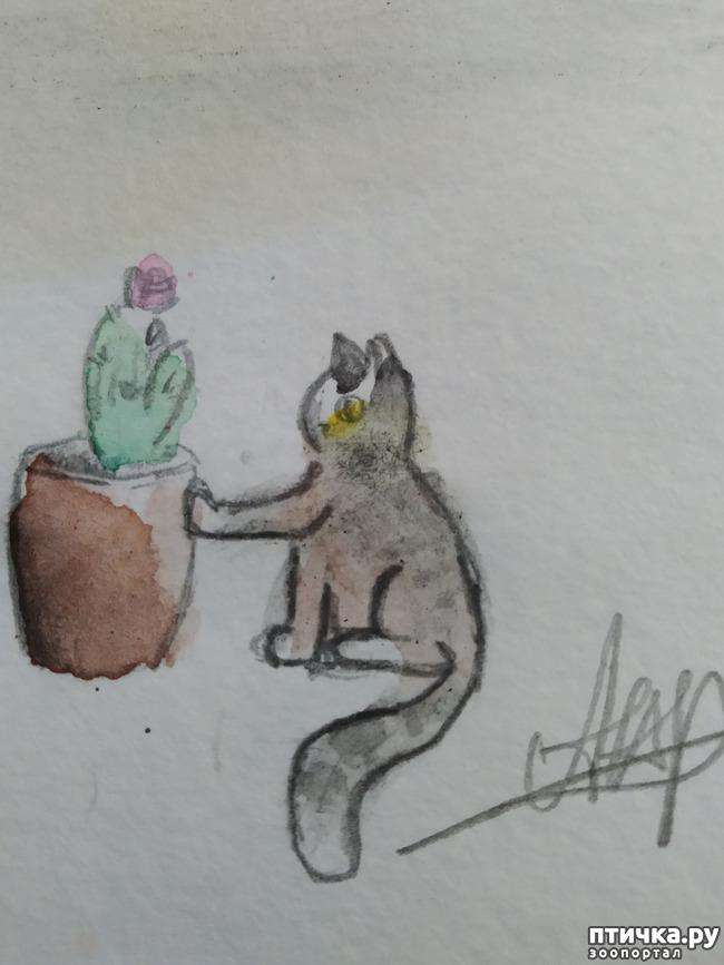 фото 13: Главные правила кошек