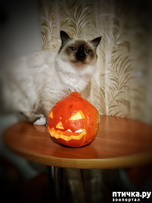 фото: Нам не страшен Хэллоуин!